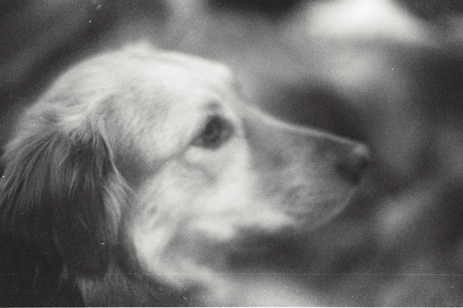 Penny - our old dog