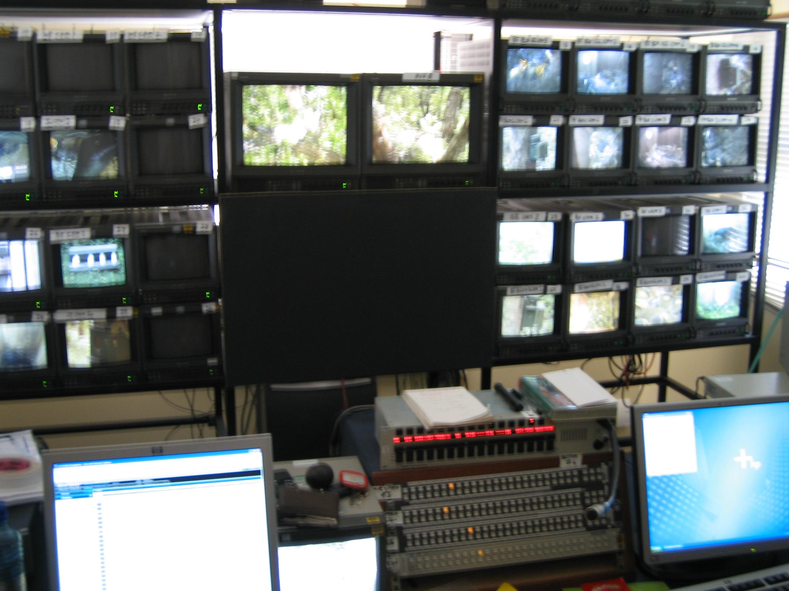 Web Streaming for Springwatch 2006