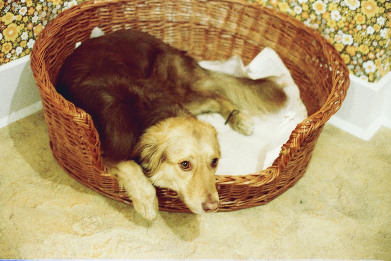 Penny - the Shearer family dog