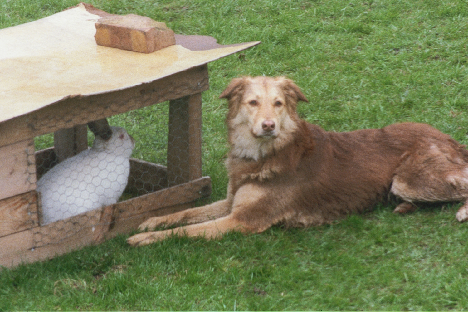 Penny (dog) and Bobtail (rabbit)