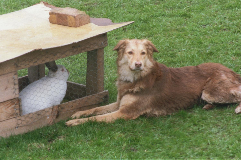 Penny (dog) and Bobtail (rabbit)