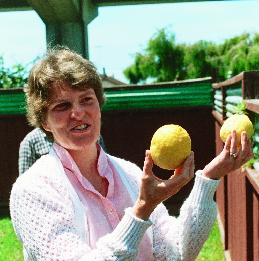 Lori Shearer examines the fruit
