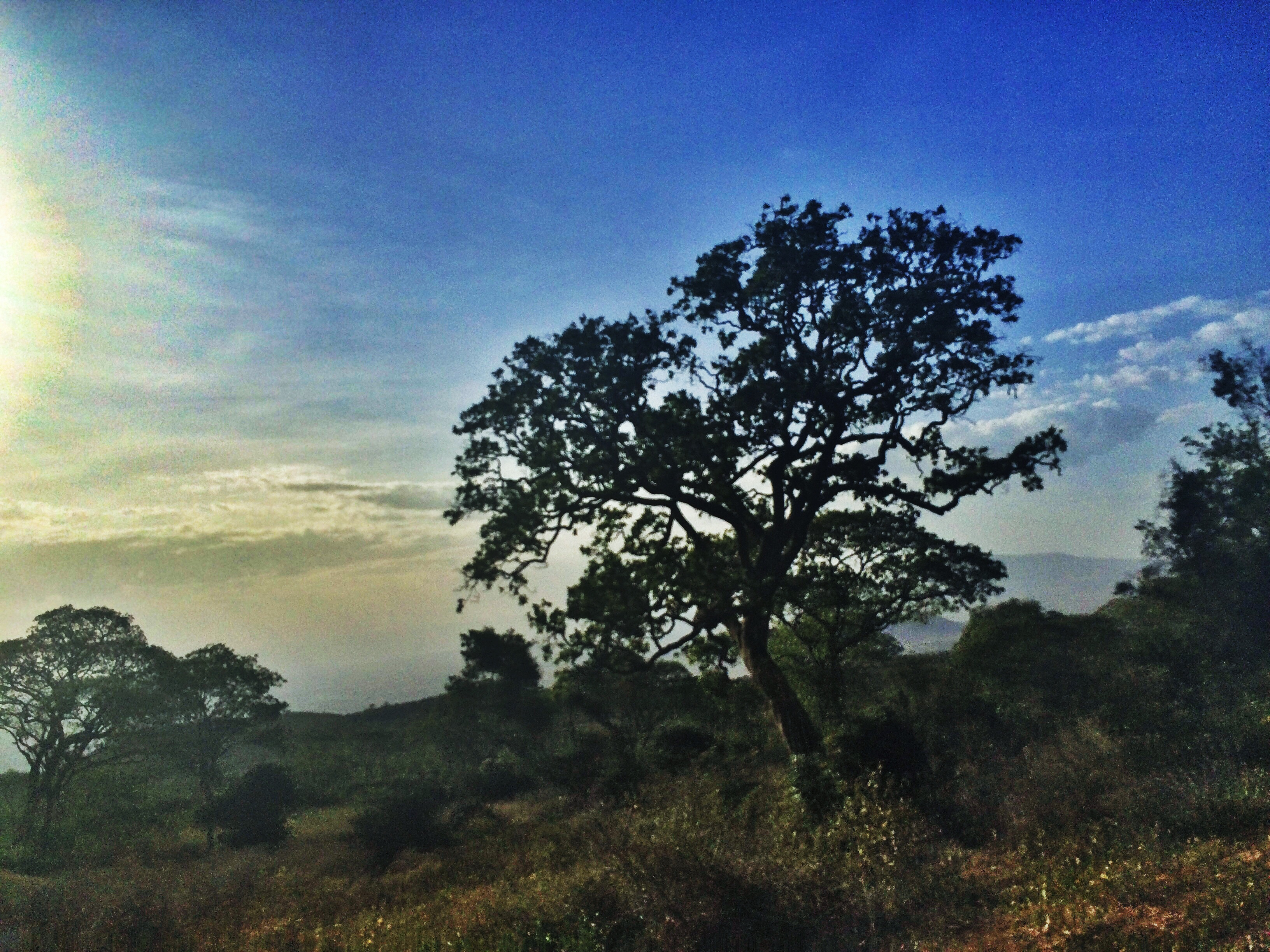 Tree over the Great Rift Valley, Kenya