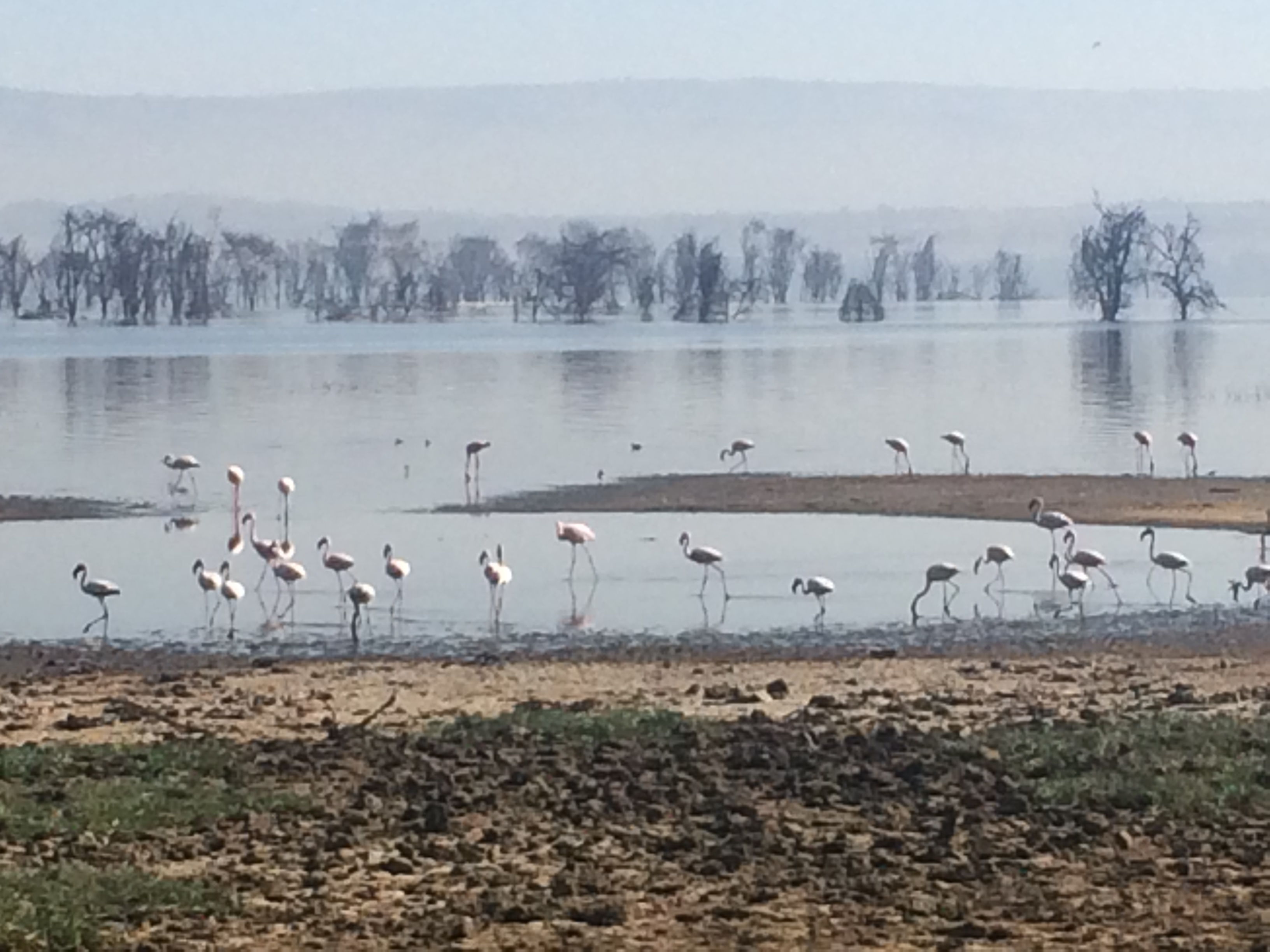 Flamingoes at Lake Nakuru National Park, Kenya, Africa