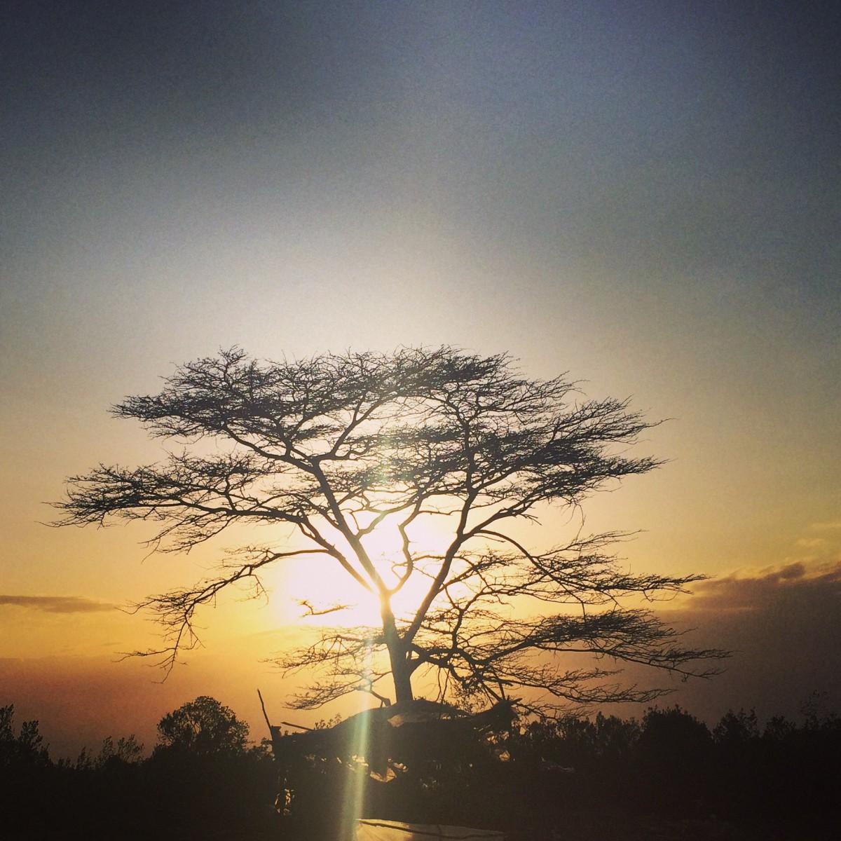 African Sunset Tree, Nairobi - Kenya