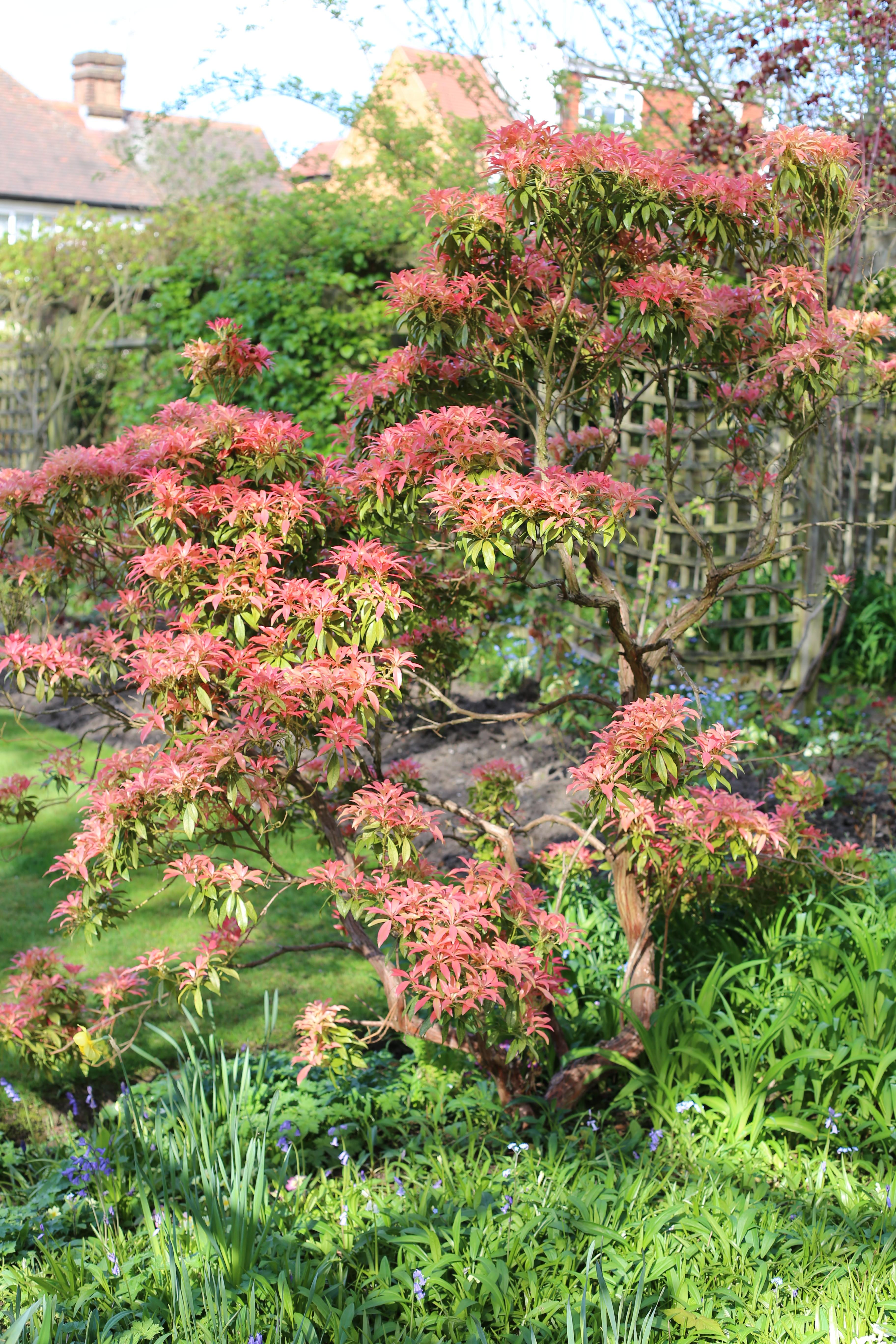 The Shearer garden in Woodford, Spring 2015