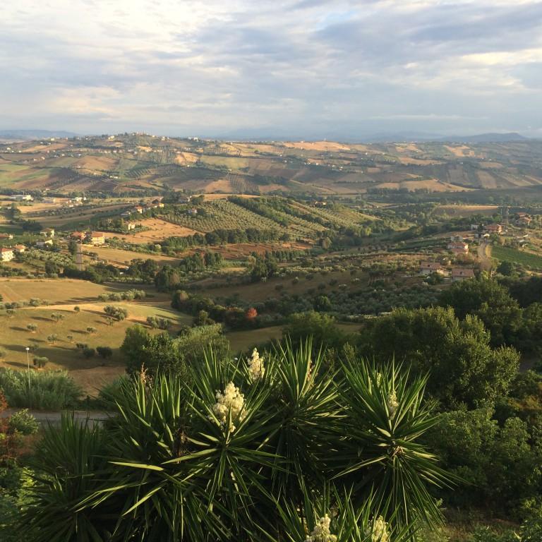Olive Groves, Teramo, Italy
